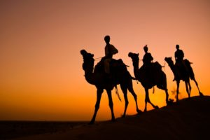 three people riding three camels in sunset