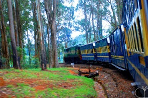 toy train travelling through a forest