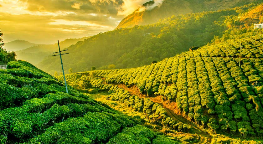 munnar mountains with sunset