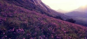 Neelakurinji mountain