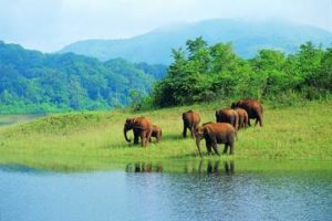 seven elephants in wildlife of kerala