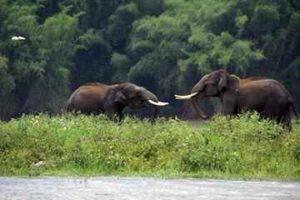two elephants in a jungle of wayanad