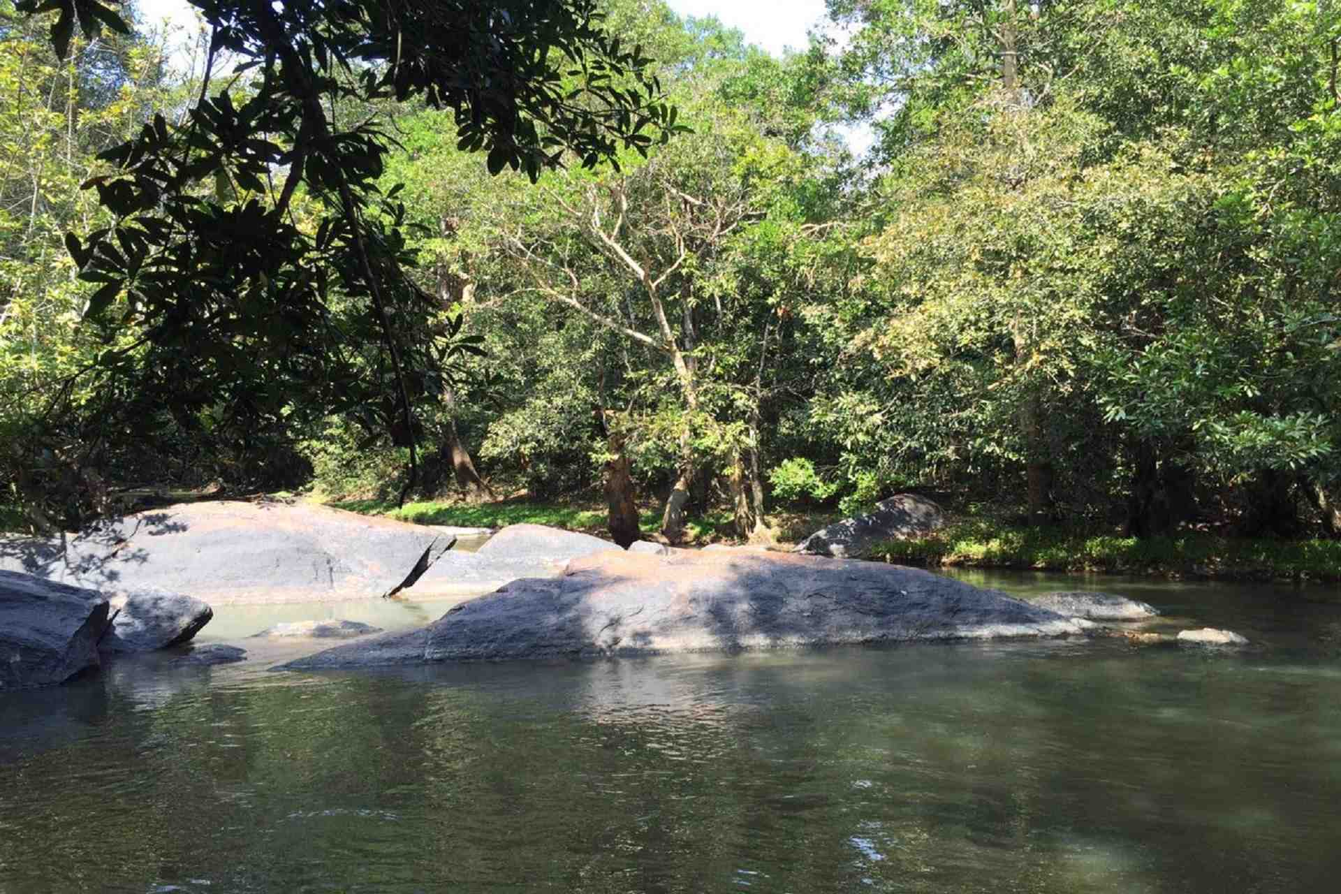 river and a jungle in wayanad