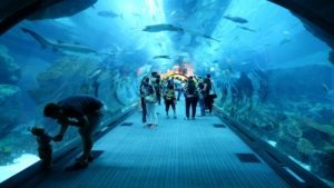 underwater aquarium in dubai