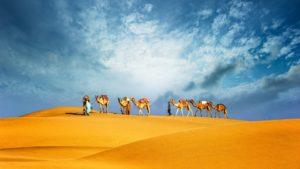camel on sands in dubai
