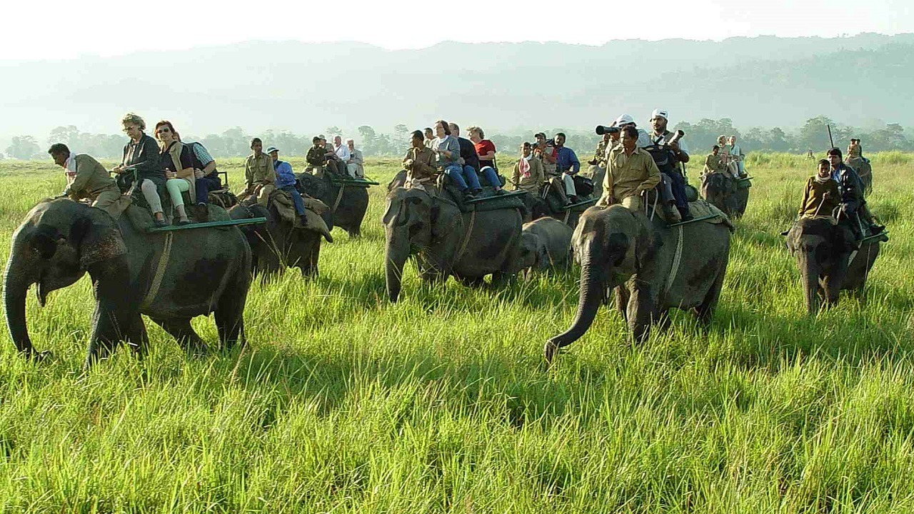 people riding on elephants on grassland