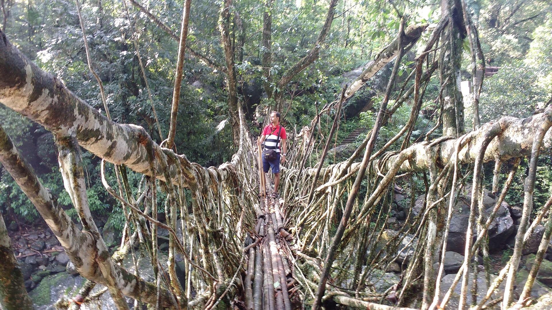 people walking on long root bridge