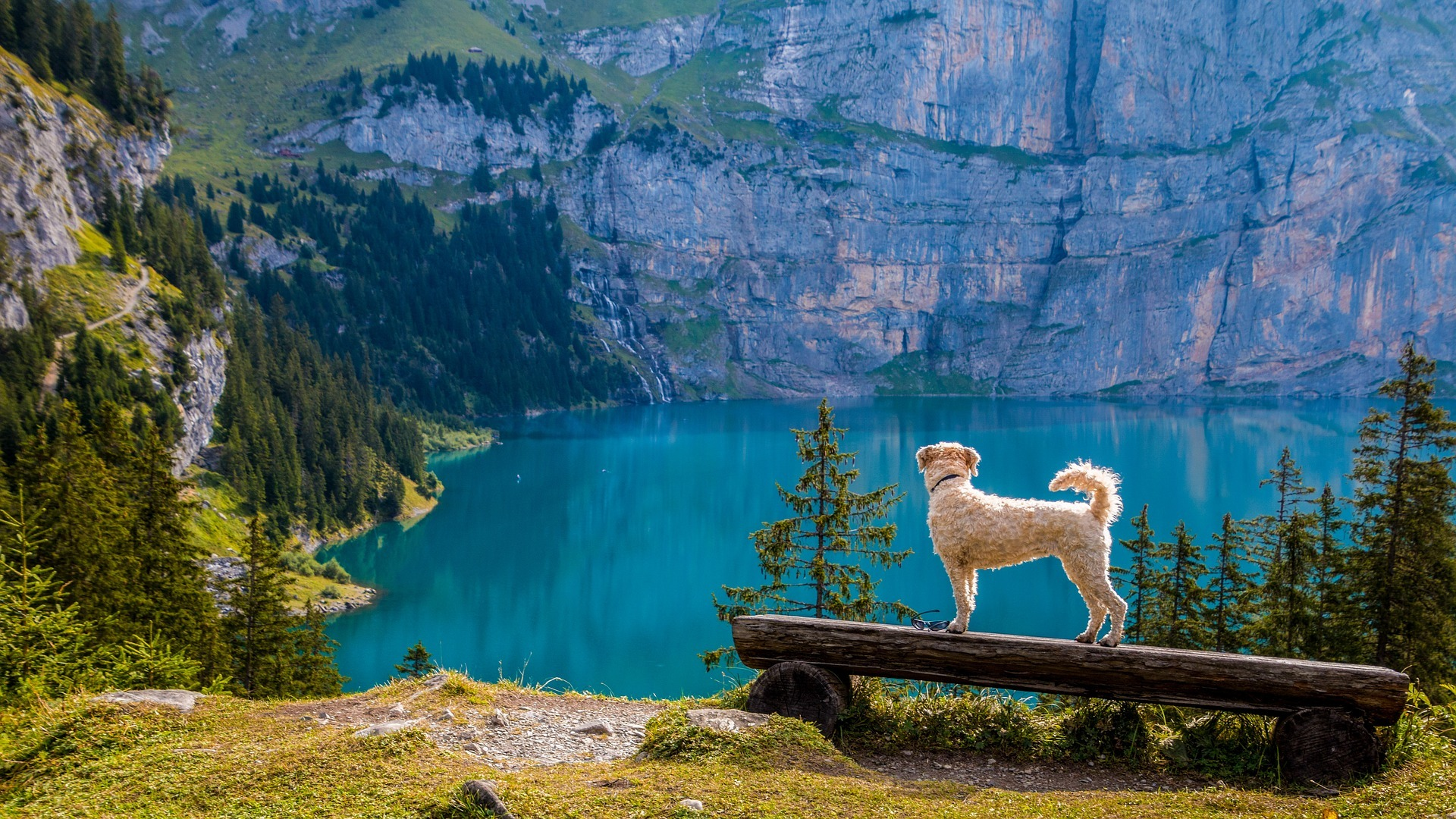 lake beside a mountain, a dog standing on a rock ledge