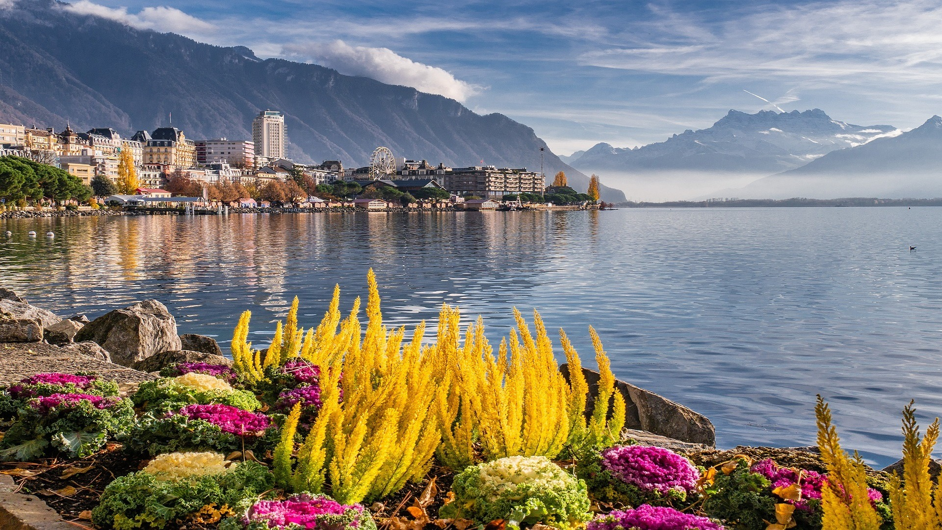 plants on rock, sea water, mountain, city
